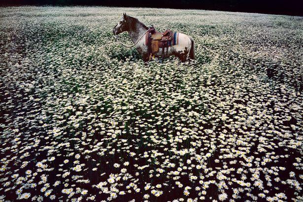 Lucky Spot in Daisy Field, Sussex, 1985